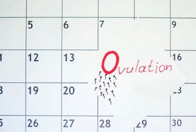 Is there a fixed ovulation time in the cycle