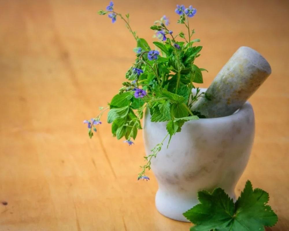 Heilpflanzen bei Menstruationsbeschwerden