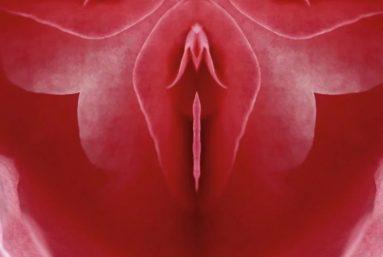 Function of clitoris