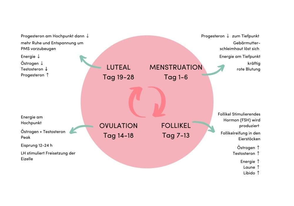 Was mit den Hormonen während dem Zyklus passiert