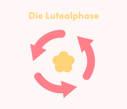 Lutealphase