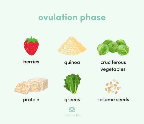 Nutrition in the ovulation phase