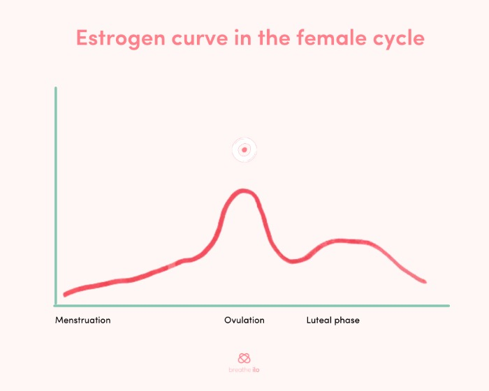 Estrogen curve in the female cycle
